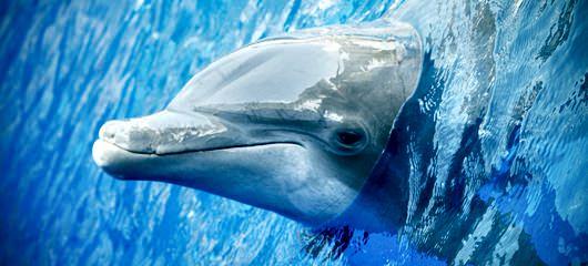 miami-seaqarium-fotografije-delfinov-008