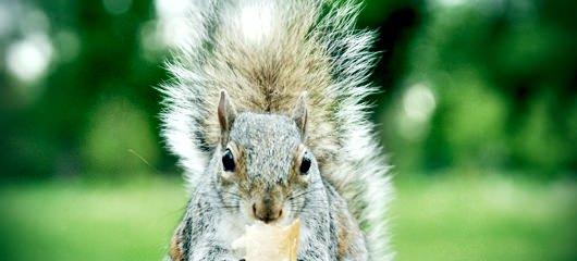 veverica-fotografije-003