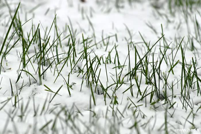 let-it-snow-01.jpg