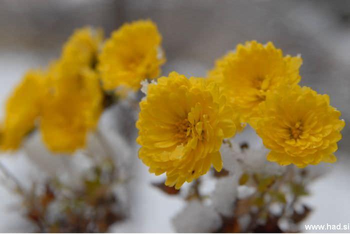 let-it-snow-02.jpg