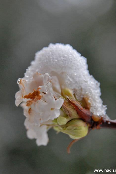 let-it-snow-03.jpg