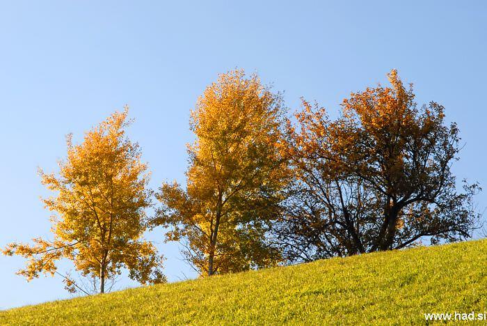 po-obronkih-gozdov-01.jpg