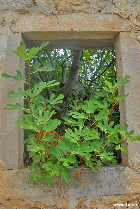 pogled-skozi-okno-01.jpg
