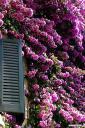 flora-fotografije-11.jpg