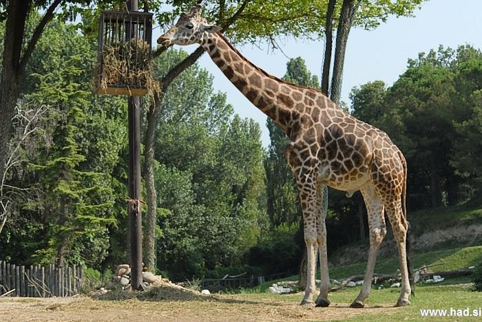parco-natura-viva-safari-park-005.jpg