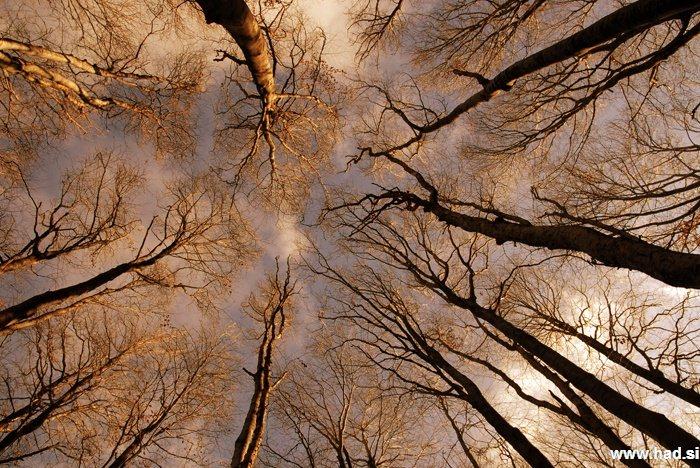 pogled-v-nebo-04.jpg