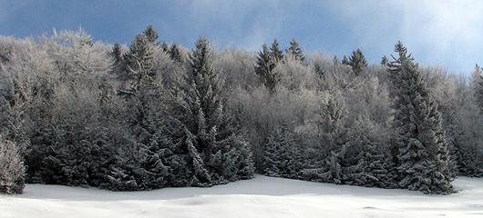 sprehod-po-snegu-slike-03.jpg