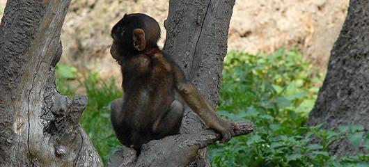 opicke-majhne-opice-fotografije-01