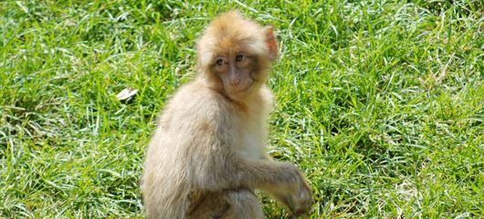 opicke-majhne-opice-fotografije-09
