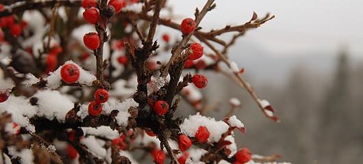sprehod-po-snegu-fotografije-10.jpg