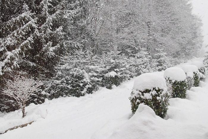 sneg sneg 04