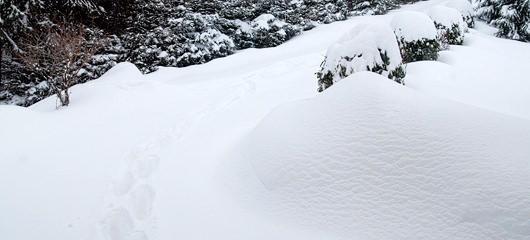 sneg na prhovcu