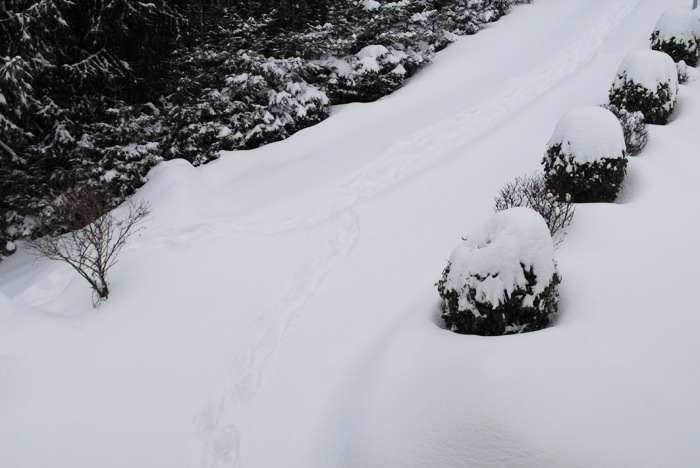 sneg in sneg in sneg 02