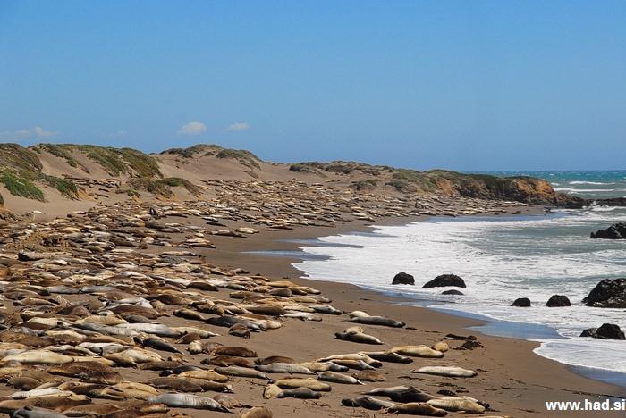 morski levi obala fotografije 08