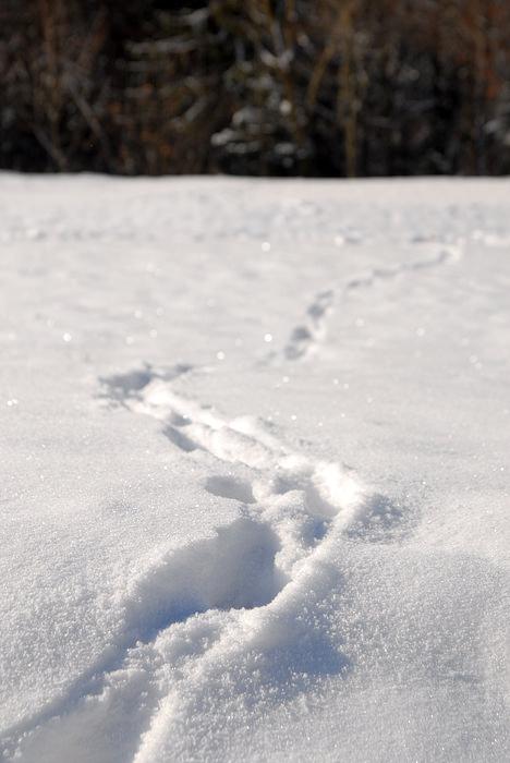 sprehod_po_snegu_02