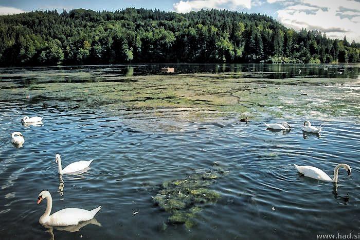 jezera_bohinjsko_blejsko_gradisko_zbiljsko_005