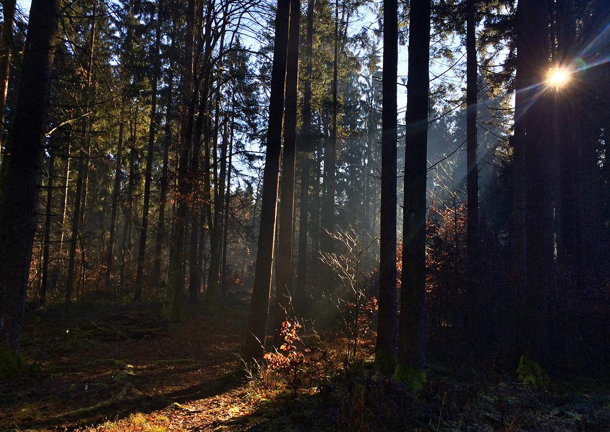 wood_magic_02