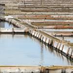 Sečoveljske soline – oaza miru in tišine