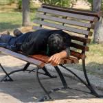 Poletna utrujenost 1
