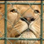 Fotopis Zoo Zagreb 36