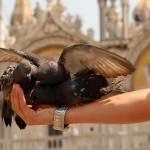 Fotopis po Benetkah - Benetke izlet 9