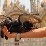 benetke venezia 09 150x150 Fotopis po Benetkah   Benetke izlet