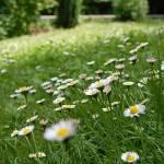 Moja trava ni prava trava 2