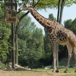 Parco Natura Viva - safari park 6