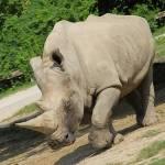 Parco Natura Viva - safari park  19