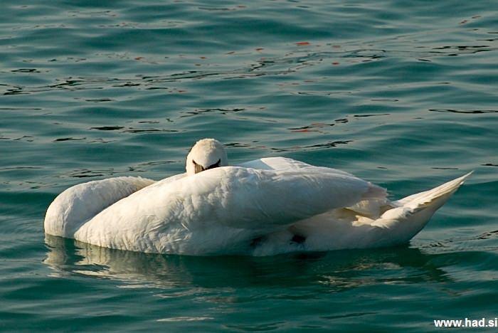 Pernate živali, zjutraj, na obali jezera fotografije