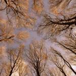 pogled-v-nebo-03.jpg