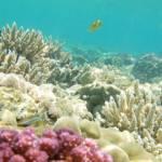 Korale – podvodne fotografije