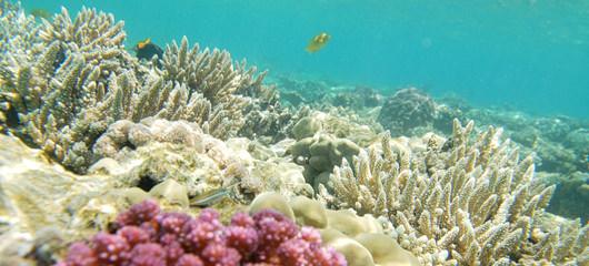 korale - fotografije