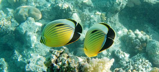 podvodne fotografije egipt