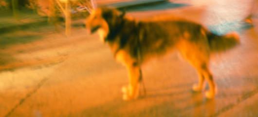 Blurred photos 3