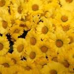Jesen ali pomlad? 1