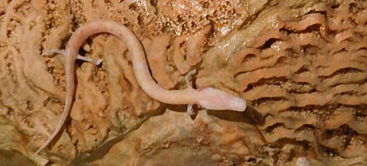 Postojnska jama fotografije - Postojna Cave photos 2