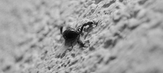 Škorpijon - part deux 6