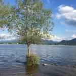 Skok v Kimsko jezero Chiemsee1