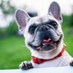 Poletje in pasje tacke izogibajte se hoji po vrocem asfaltu in betonu s psom