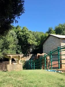 Brioni 24 ur v nacionalnem parku Brioni safari parku pri Kokiju in voznja z elektricnim avtom po otoku10