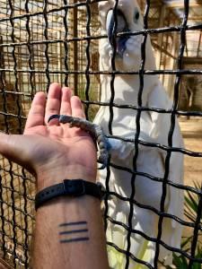Brioni 24 ur v nacionalnem parku Brioni safari parku pri Kokiju in voznja z elektricnim avtom po otoku17