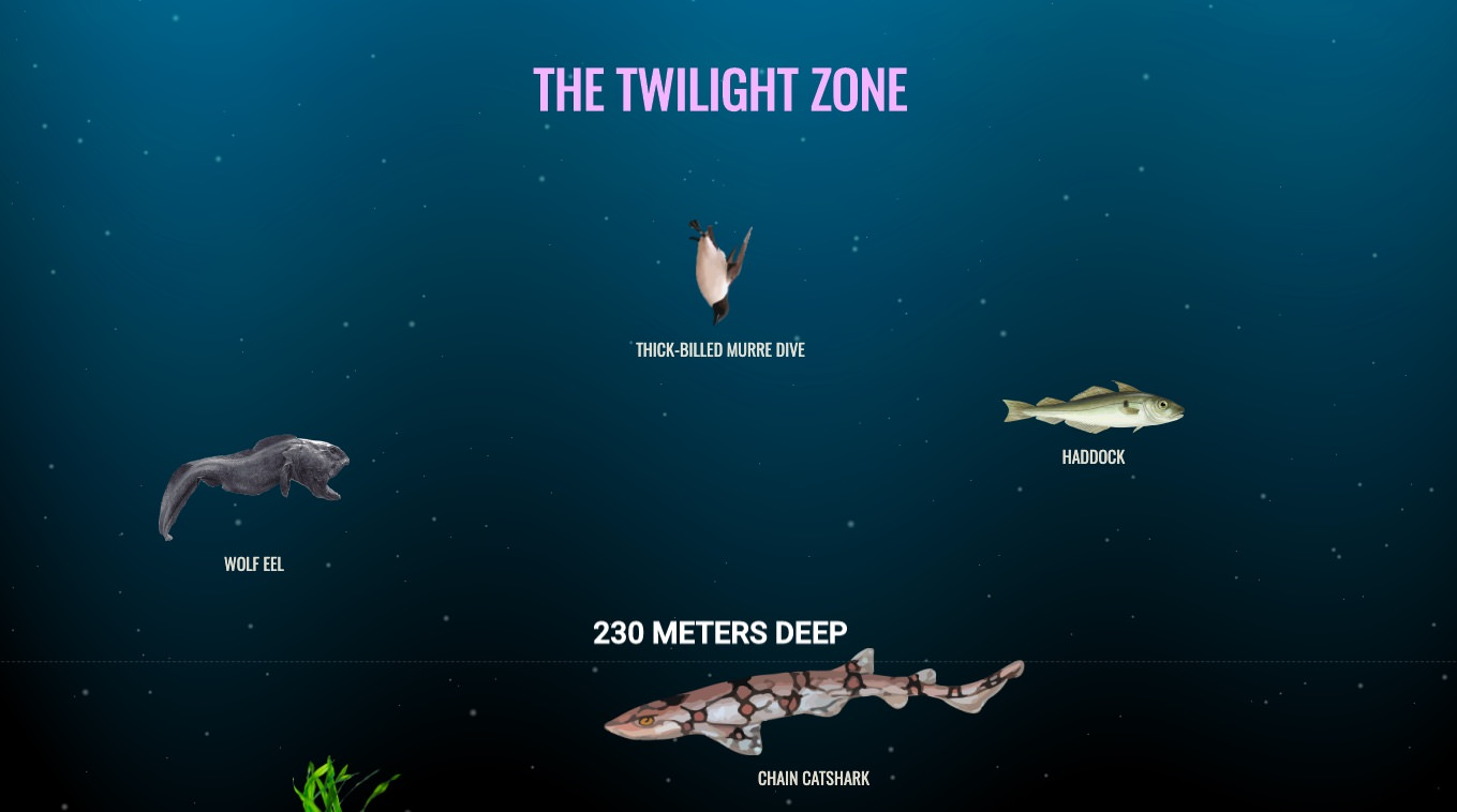 Kaj se skriva v morskih globinah