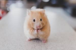 Bo Ales Primc zahteval odstop Branka Grimsa levicarske podgane s tako steklino