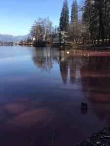 Blejsko jezero je rdece 2