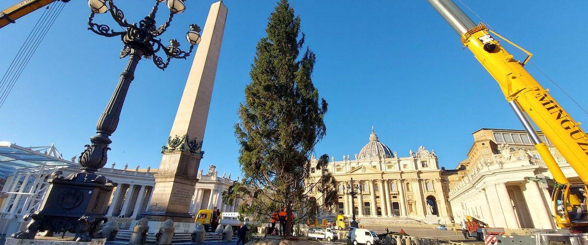 smreka vatikan 1
